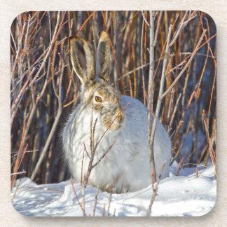 USA, Wyoming, White-tailed Jackrabbit sitting on Beverage Coaster