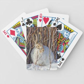 USA, Wyoming, White-tailed Jackrabbit sitting on Bicycle Playing Cards