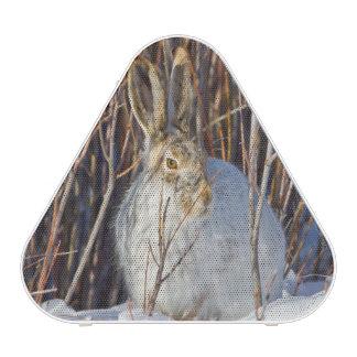 USA, Wyoming, White-tailed Jackrabbit sitting on Bluetooth Speaker