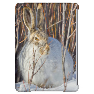 USA, Wyoming, White-tailed Jackrabbit sitting on Case For iPad Air