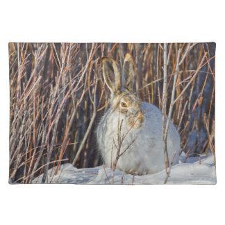 USA, Wyoming, White-tailed Jackrabbit sitting on Cloth Placemat