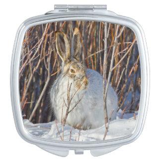 USA, Wyoming, White-tailed Jackrabbit sitting on Compact Mirror