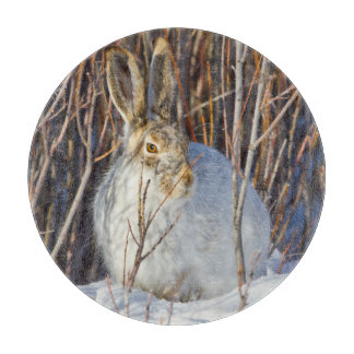 USA, Wyoming, White-tailed Jackrabbit sitting on Cutting Board