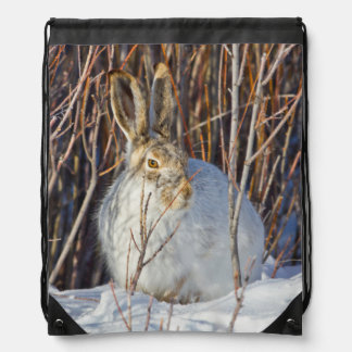 USA, Wyoming, White-tailed Jackrabbit sitting on Drawstring Backpack