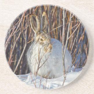 USA, Wyoming, White-tailed Jackrabbit sitting on Drink Coaster