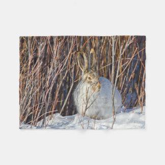 USA, Wyoming, White-tailed Jackrabbit sitting on Fleece Blanket