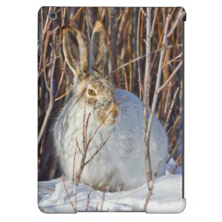 USA, Wyoming, White-tailed Jackrabbit sitting on iPad Air Case