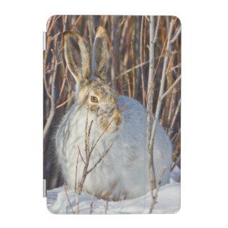 USA, Wyoming, White-tailed Jackrabbit sitting on iPad Mini Cover