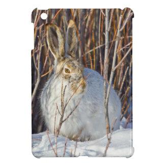 USA, Wyoming, White-tailed Jackrabbit sitting on iPad Mini Covers