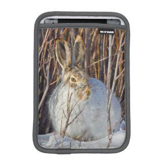USA, Wyoming, White-tailed Jackrabbit sitting on iPad Mini Sleeve
