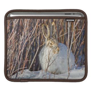 USA, Wyoming, White-tailed Jackrabbit sitting on iPad Sleeves