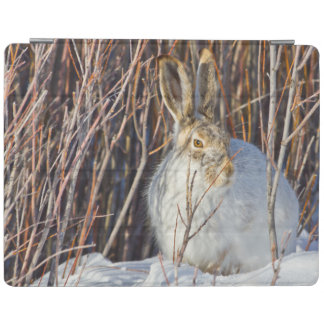USA, Wyoming, White-tailed Jackrabbit sitting on iPad Smart Cover