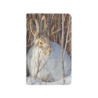 USA, Wyoming, White-tailed Jackrabbit sitting on Journal