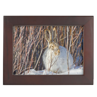 USA, Wyoming, White-tailed Jackrabbit sitting on Keepsake Box