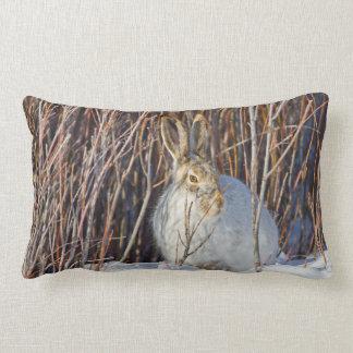 USA, Wyoming, White-tailed Jackrabbit sitting on Lumbar Pillow