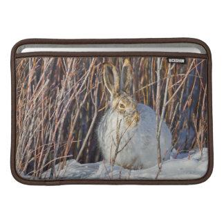 USA, Wyoming, White-tailed Jackrabbit sitting on MacBook Sleeve