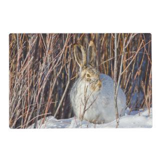 USA, Wyoming, White-tailed Jackrabbit sitting on Placemat
