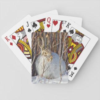 USA, Wyoming, White-tailed Jackrabbit sitting on Playing Cards