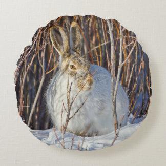 USA, Wyoming, White-tailed Jackrabbit sitting on Round Pillow