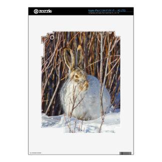 USA, Wyoming, White-tailed Jackrabbit sitting on Skin For iPad 3