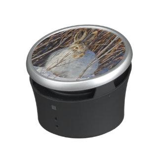 USA, Wyoming, White-tailed Jackrabbit sitting on Speaker