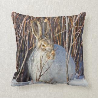 USA, Wyoming, White-tailed Jackrabbit sitting on Throw Pillow