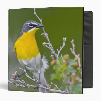 USA, Wyoming, Yellow-breasted Chat Icteria 2 Binder