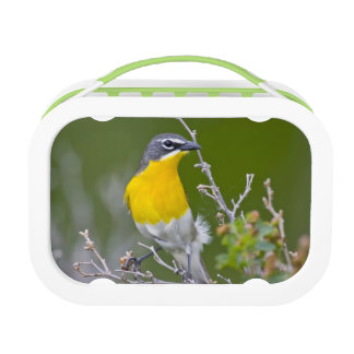 USA, Wyoming, Yellow-breasted Chat Icteria 2 Lunch Box