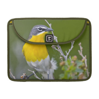 USA, Wyoming, Yellow-breasted Chat Icteria 2 Sleeves For MacBooks