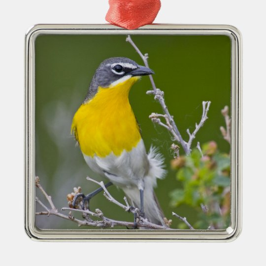 USA, Wyoming, Yellow-breasted Chat Icteria 2 Metal Ornament