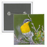 USA, Wyoming, Yellow-breasted Chat Icteria 2 Pinback Button