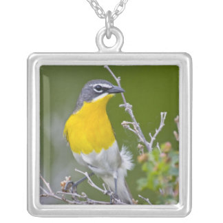USA, Wyoming, Yellow-breasted Chat Icteria 2 Silver Plated Necklace