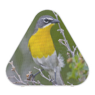 USA, Wyoming, Yellow-breasted Chat Icteria 2 Speaker