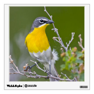 USA, Wyoming, Yellow-breasted Chat Icteria 2 Wall Sticker