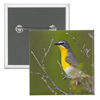 USA, Wyoming, Yellow-breasted Chat Icteria Pinback Button