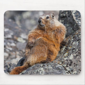 USA, Wyoming, Yellowstone National Park 1 Mouse Pad