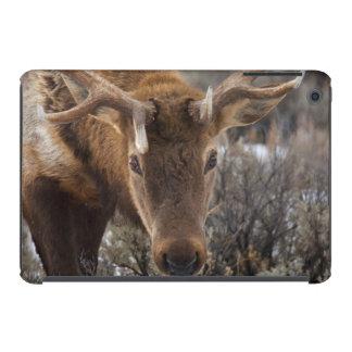 USA, Wyoming, Yellowstone National Park 3 iPad Mini Case