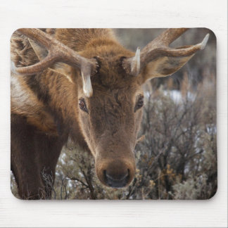 USA, Wyoming, Yellowstone National Park 3 Mouse Pad