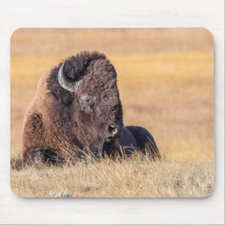 USA, Wyoming, Yellowstone National Park, Bison Mouse Pad