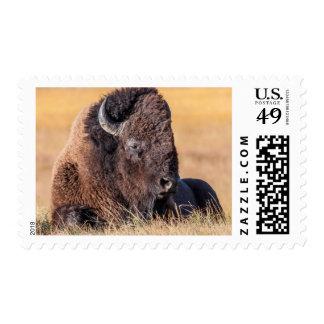 USA, Wyoming, Yellowstone National Park, Bison Postage