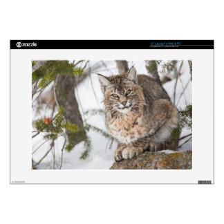 "USA, Wyoming, Yellowstone National Park, Bobcat 1 15"" Laptop Decals"
