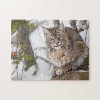 USA, Wyoming, Yellowstone National Park, Bobcat 1 Jigsaw Puzzle