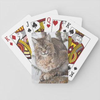USA, Wyoming, Yellowstone National Park, Bobcat 1 Playing Cards