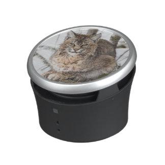 USA, Wyoming, Yellowstone National Park, Bobcat 1 Speaker