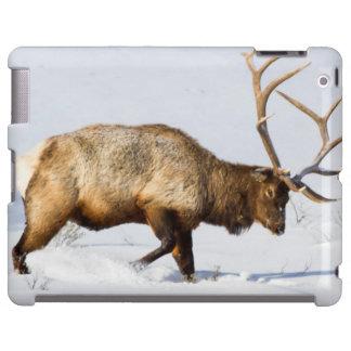 USA, Wyoming, Yellowstone National Park, Bull 1