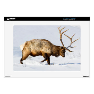 "USA, Wyoming, Yellowstone National Park, Bull 1 15"" Laptop Skins"