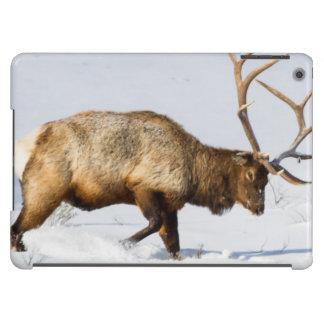 USA, Wyoming, Yellowstone National Park, Bull 1 iPad Air Cases