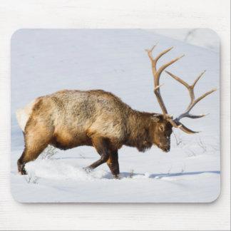 USA, Wyoming, Yellowstone National Park, Bull 1 Mouse Pad