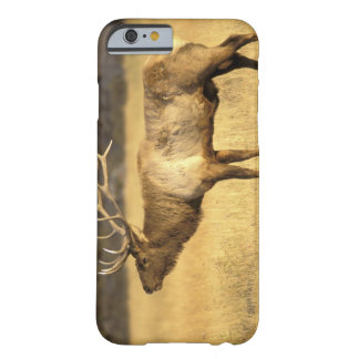 USA, Wyoming, Yellowstone National Park. Bull Barely There iPhone 6 Case