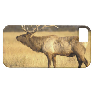 USA, Wyoming, Yellowstone National Park. Bull iPhone SE/5/5s Case